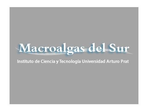 Macro Algas del Sur - WDesign - Empresa de Diseño Web